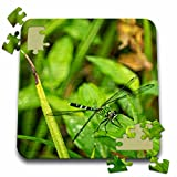 Boehm Photography Insect - A green dragonfly on a leaf - 10x10 Inch Puzzle (pzl_245576_2)