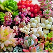 Cheap! 50seeds/pack 22 Kinds Mix Succulent seeds Lithops Pseudotruncatella Bonsai plants Seeds for home & garden