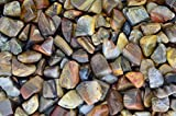 Fantasia Materials: 1 lb Tumbled Petrified Wood Stones from Madagascar - Small - 0.75'' to 1.25'' Avg. - Premium Polished Rocks for Art, Crafts, Decoration, Landscaping, Fountains, Reiki and More!