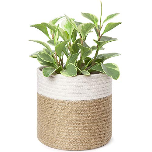 Dahey Cotton Rope Plant