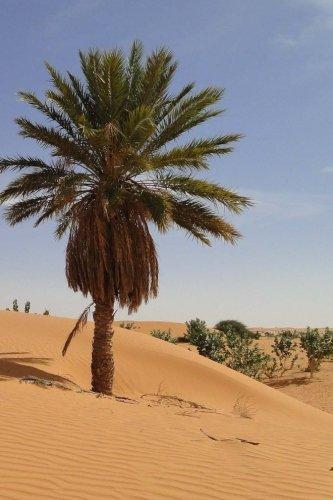 Mauritania Notebook