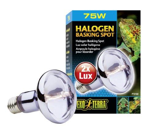 - Exo Terra Sun-Glo Daylight Halogen Lamp, 75-Watt