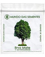 50 Sementes de Erva Mate - Ilex Paraguariensis