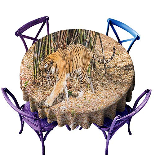 Potter Park Zoo Halloween (Acelik Washable Round Tablecloth,Bengal Tiger Close View at Zoo at Different Position at National Park 1,Stain Resistant, Washable,40)