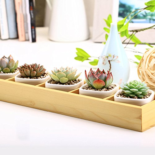 Best Garden Tools Set of Modern Decorative Small White Square Ceramic Succulent Plant Pot 5 Flower Planters with 1 Wooden Tray Box Home Decor