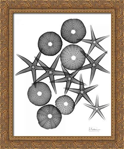 Starfish Medley - Starfish and Sea Urchin Medley 20x24 Gold Ornate Wood Framed Canvas Art by Koetsier, Albert