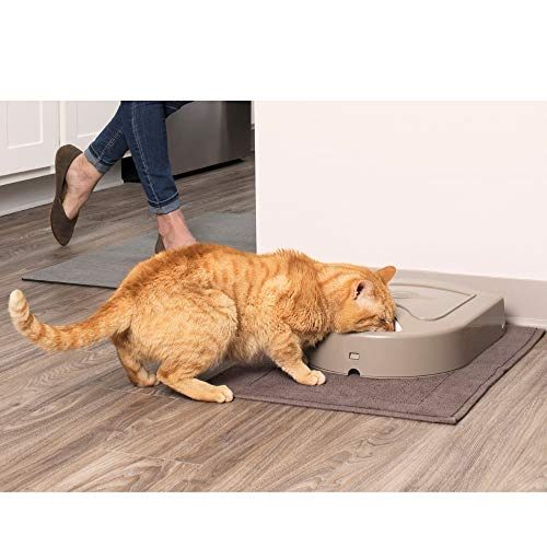 PetSafe 5 Meal Pet Feeder for Dogs and Cats - Food Dispenser - Portion Control