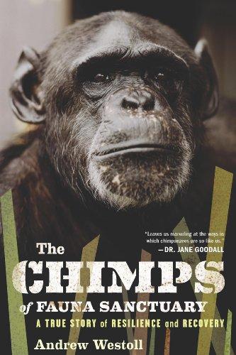 Pet Chimpanzee - 6