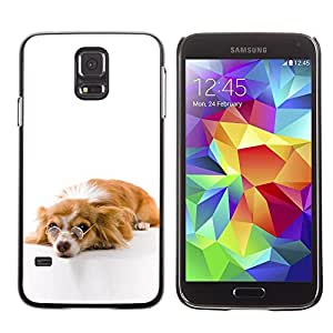 PC/Aluminum Funda Carcasa protectora para Samsung Galaxy S5 SM-G900 Funny Glasses Dog Cute / JUSTGO PHONE PROTECTOR
