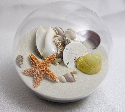 Sand and Shell Sandglobe Paperweight 3-inch White Sand by Beachball Sandglobe