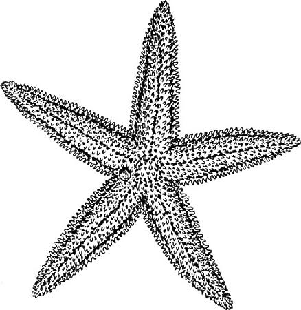 58mm round badge style keyring line drawing starfish amazon co uk