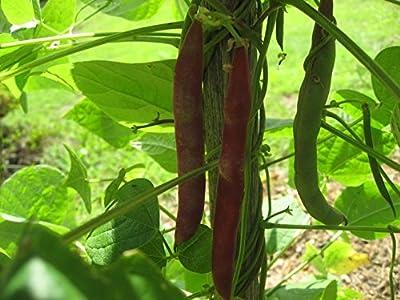 Cherokee Trail of Tears Pole Bean Seeds by Stonysoil Seed Company