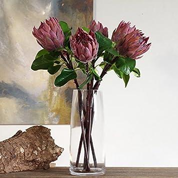 Amazon De 1 Stuck Lila Grun Fake The King Protea Cynaroides