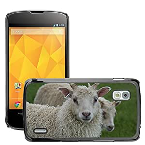 Hot Style Cell Phone PC Hard Case Cover // M00112983 Animals Sheep Lambs // LG Nexus 4 E960