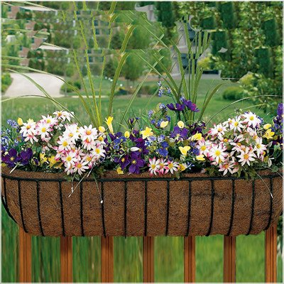 Canterbury Horse Trough Rail planter Size: 36
