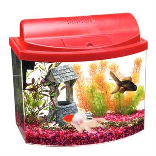 Amazon.com   Aqueon 17774 Mini Bow 5 Gallon Desktop Aquarium Kit ... 8aa0a20741fb