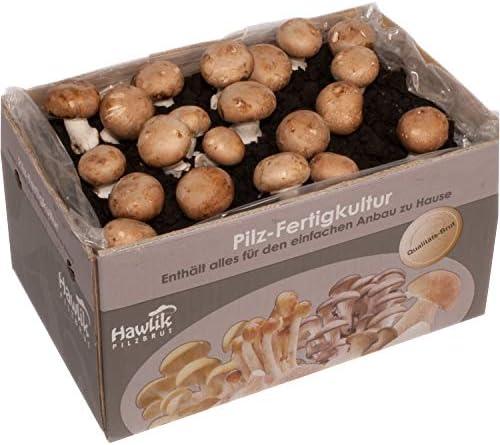 Große XXL Steinchampignon Pilzkultur I Hawlik Pilzzucht-Set I kinderleicht Pilze selber züchten I ohne Vorkentnisse
