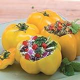 Organic Yellow Stuffer Tomato Seeds - A very unique gourmet tomato! Vigorous!!! (25 - Seeds)