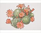 10x8 Print of Rebutia calliantha, flowering Crown Cactus, view from above (13560739)