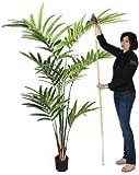 NEW KENTIA - Artificiale - con cocco naturale H.210 cm