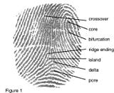 Safran Morpho MSO 1300 E3 Fingerprint Scanner