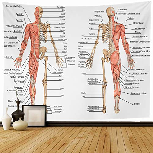 Ahawoso Tapestry Wall Hanging 80x60 Hand Muscle Human Skeleton Posterior Anterior View Bone Didactic Anatomy Science System Muscular Home Decor Tapestries Decorative Bedroom Living Room Dorm