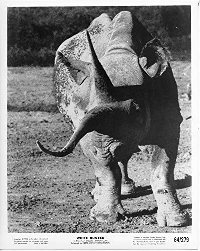 White Hunter original 1964 8x10 photo rhino scene