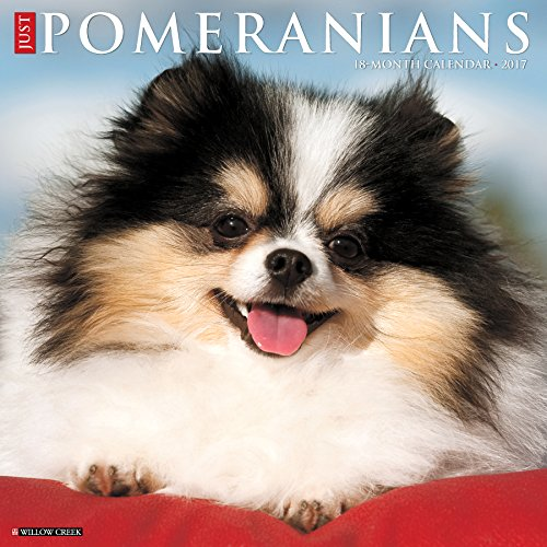 Just Pomeranians 2017 Wall Calendar