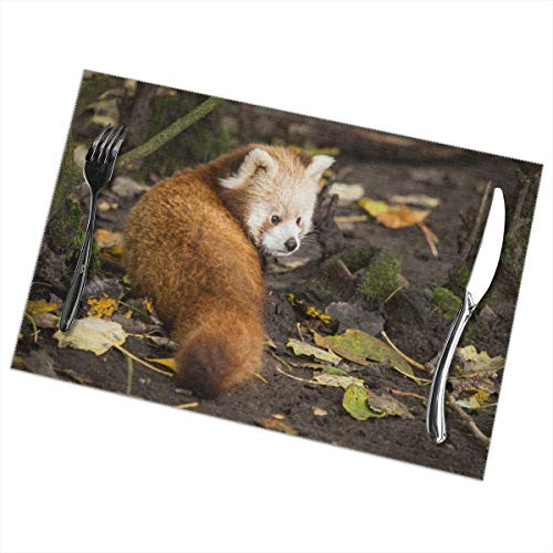 - XinTai Personalized Ailurus Fulgens Fashion Placemats for Dining Table Set of 6