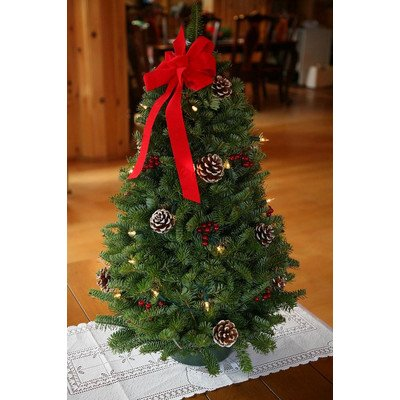 Worcester Wreath 18-Inch The Maine Balsam Twinkle Tabletop - Balsam Fresh Wreath