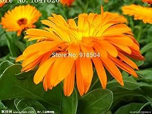 AAA 2016 nuevos 50pcs 25kinds Flores para eligió raras semillas china flores color de rosa del envío libre de las flores