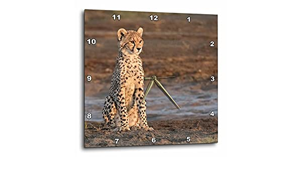 Tanzania 3D Rose Africa Serengeti Cheetah cub Wall Clock 10 x 10 ...