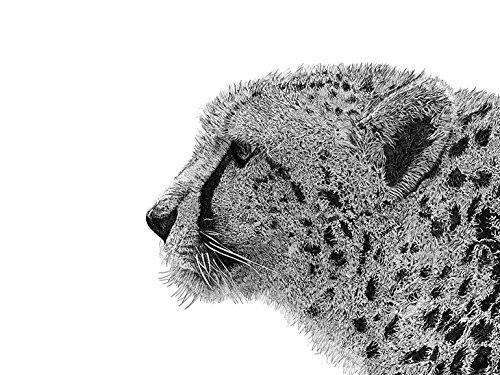 Cheetah (Print - 16x21 in.)