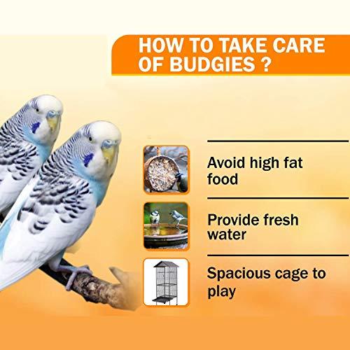 JAINSONS PET PRODUCTS Padmashri Birds Food Expert for Myna and Bulbul Meet Daily Nutrition Bird Food Natural Ingredients -500 g