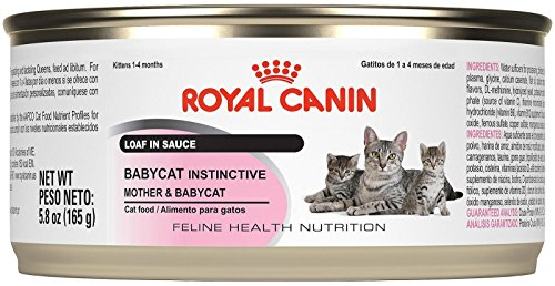 Royal Canin Feline Health Nutrition Mother and Babycat Canned Cat Food, 5.8 oz (Pack of 24)