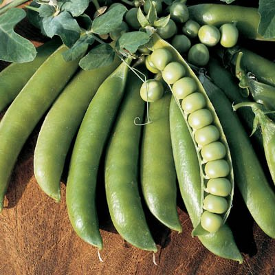 Pea Lincoln Seeds - Vegetable Seeds Package - 1/2 lb. - Shell Pea