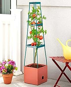 3-Tier Torre de tomate
