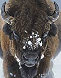 Winter Warrior by Terry Isaac Buffalo Bison Photograph Wildlife Nature Snow Print Poster 13x19
