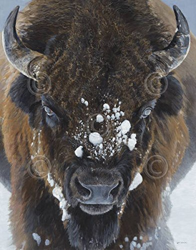 Wild Sales Buffalo - Winter Warrior Terry Isaac Buffalo Bison Wildlife Snow Poster 22x28