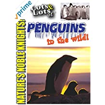 Lots & Lots of Penguins In The Wild - Nature's Noble Knights