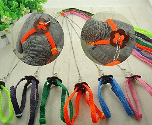 Bird Leash (1pcs Parrot Bird pigeons Harness & Leash Anti-bite Adjustable Multicolor)
