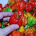 "Sweet Pepper ""Aji Dulce # 2""-(20 Seeds)Venezuelan Heirloom,Sweet,Flavorful -Rare"