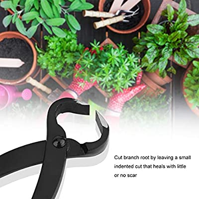 Eastbuy Branch Cutter - 205mm Professional Grade Manganese Steel Alloy Concave Root Cutters Bonsai Tools: Garden & Outdoor