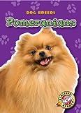 Pomeranians, Sara Green, 1600145671