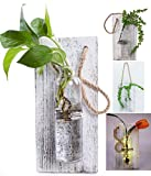 Eanjia Rustic Home Décor Wall Art Decoration Solid Wooden Board (Retro polished) Hanging Planters Wall Vases Hydroponic Plants Hanging Glassware Xmas home decor by (no flower)(White)