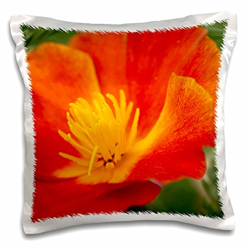 California Poppy Mission Bells - Danita Delimont - Terry Eggers - Flowers - USA, Washington, Seattle, Mission Bells Poppies - 16x16 inch Pillow Case (pc_192044_1)
