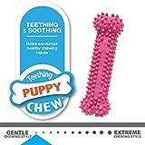 Nylabone Puppy Chew Variety Toy & Treat, Triple