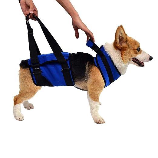 Womdee El arnés para Perros para discapacitados, el arnés para ...