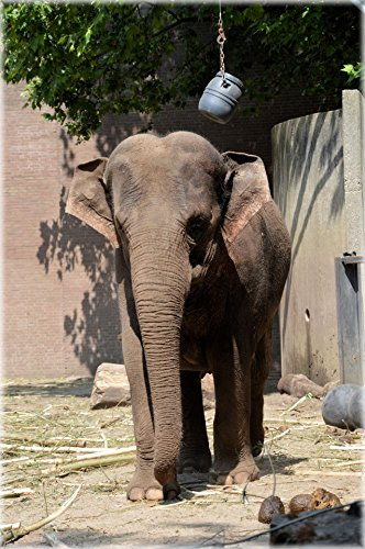 Home Comforts LAMINATED POSTER The Sri Lankan Elephant 7 Ani