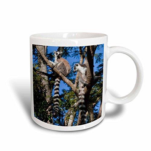 3dRose mug_131975_1 Ring Tailed Lemur Primate, Berenty Park, Madagascar Af24 Ksu0036 Keren Su Ceramic Mug, 11-Ounce